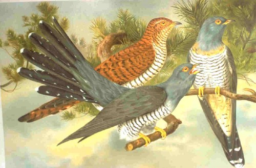 Pepuk Kuşu Resimleri,Sevgiliye Yazılmış Şiirler Uzun,Serdar Yıldırım Şiirleri,Seni Seviyorum Şiirleri